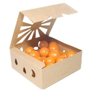 Sustainable Produce Container half pint biodegradable packaging for cherry tomatoes